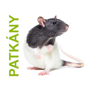 patkány állateledel webshop