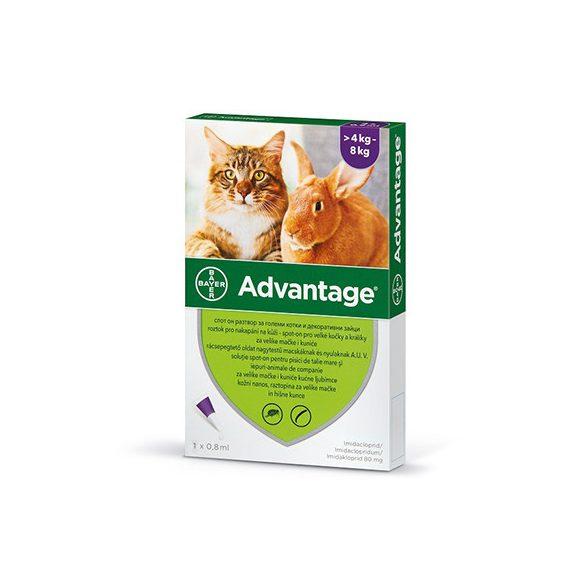 Advantage 40 nyúl/macska spot on 4-8kg 4x