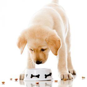 Száraz kutyatáp