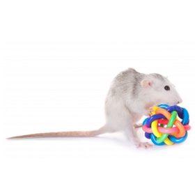 Patkány játék
